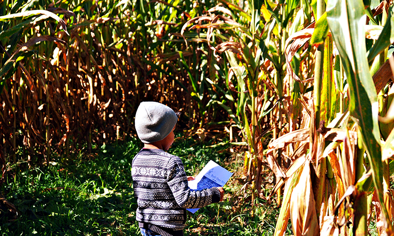 Fun, scenic corn mazes are just a short drive away.