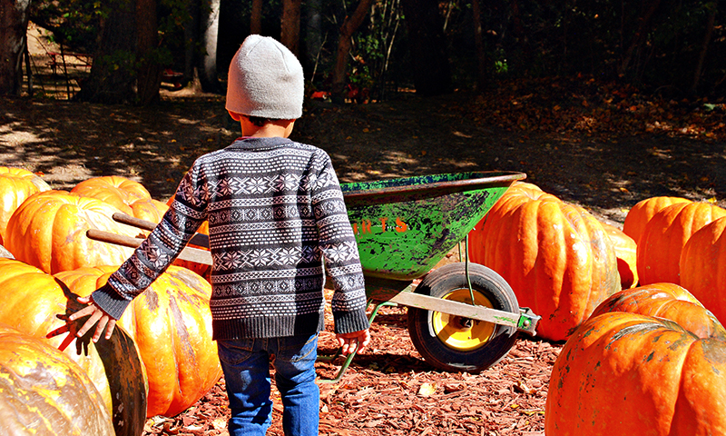 Kids love the pumpkins as big as them at Burt's Farm. (Joleen Pete)