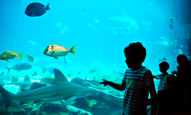 A CityPASS gets you 40-percent off admission to Georgia Aquarium. (Joleen Pete)