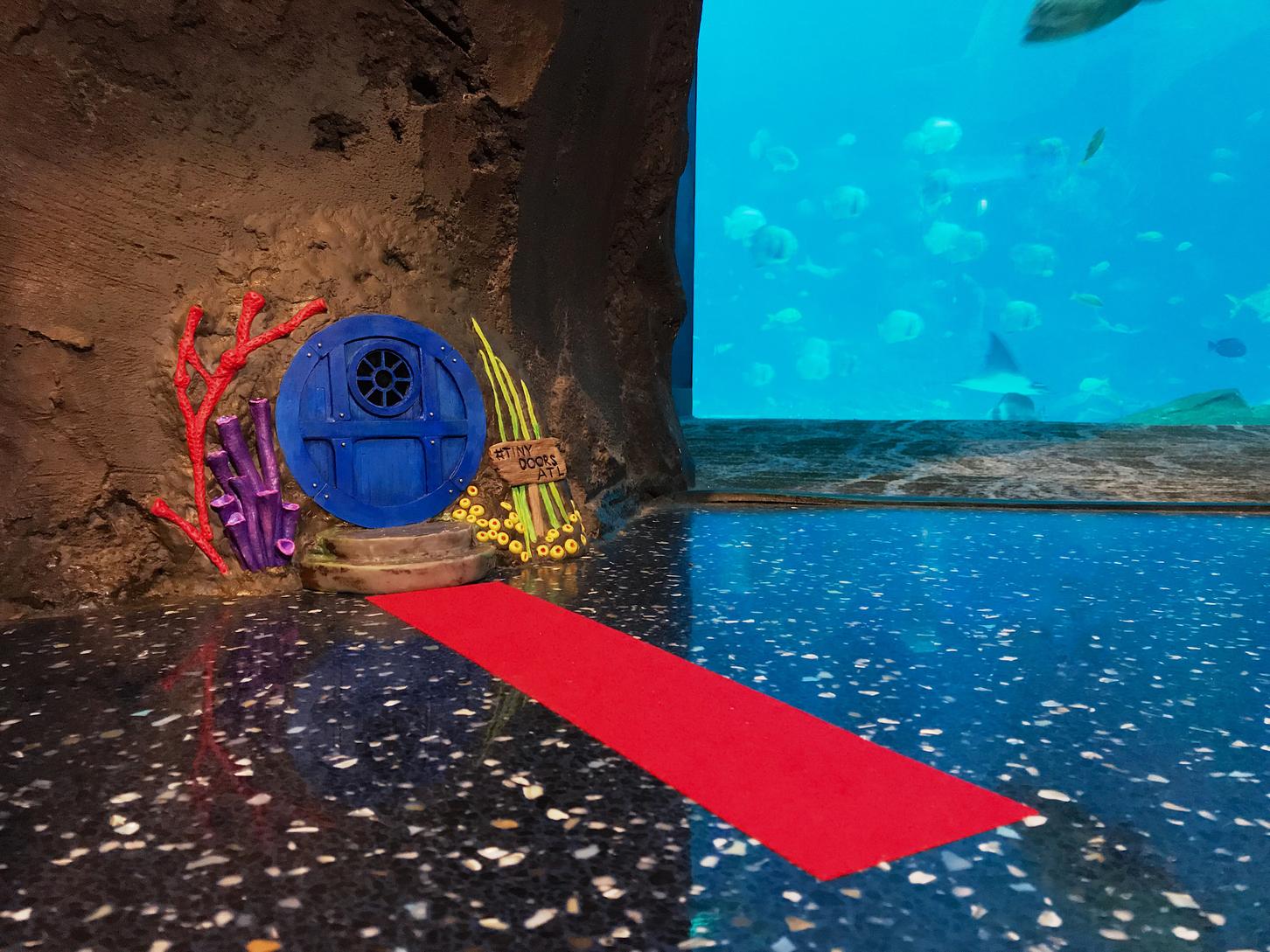 Tiny Door at Georgia Aquarium