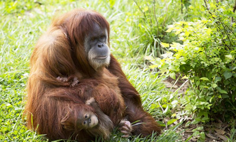 "Zoo Atlanta's ""Sippin' Safari"" promises a wild night on the town."