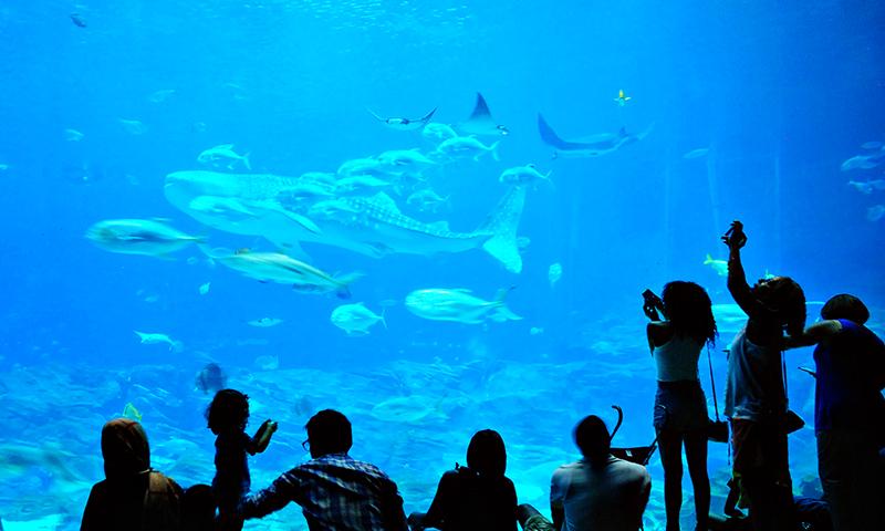Take a trip under the sea at Georgia Aquarium. (Joleen Pete Photography)