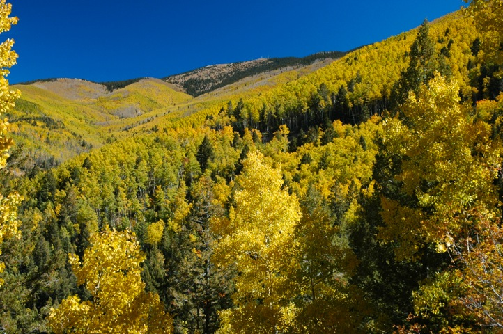 Aspen Vista Trail - Fall.jpg