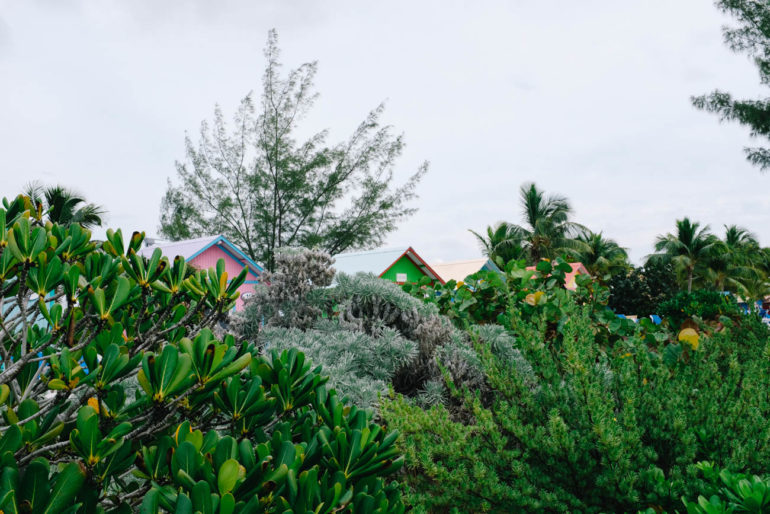 colorful bungalows peeking out from greenery
