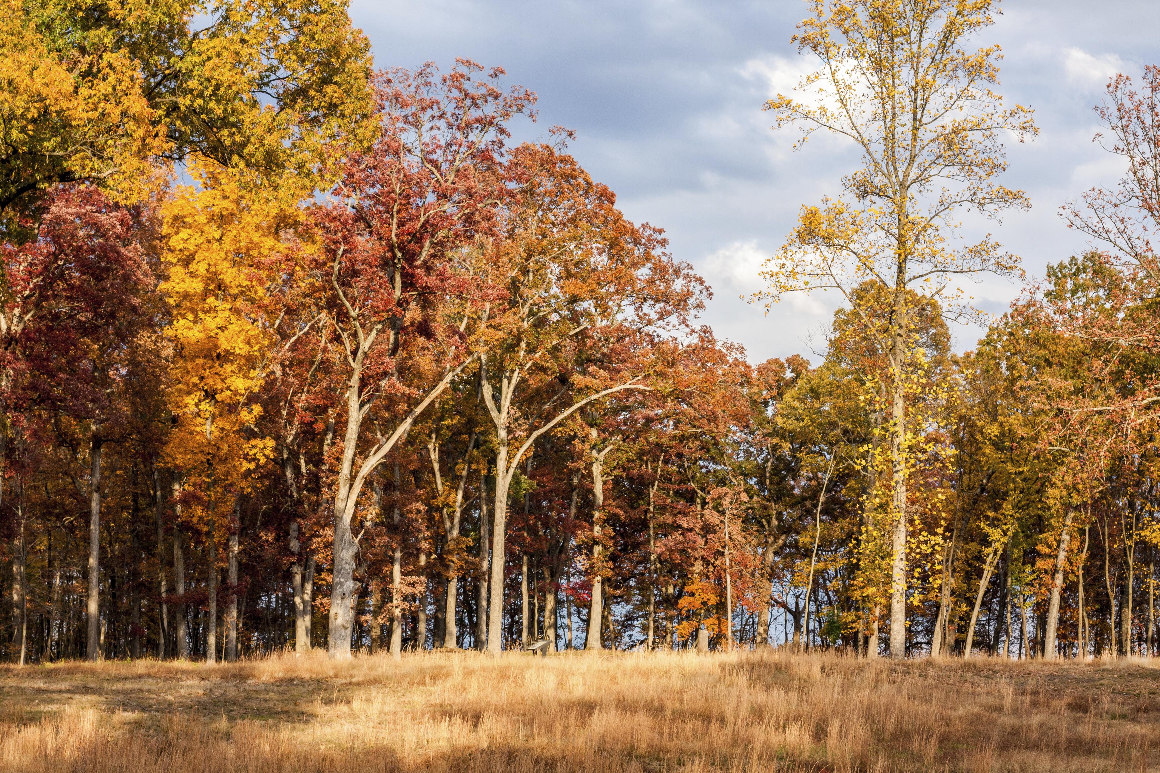 Autumn Landscape in Leesburg, Virginia