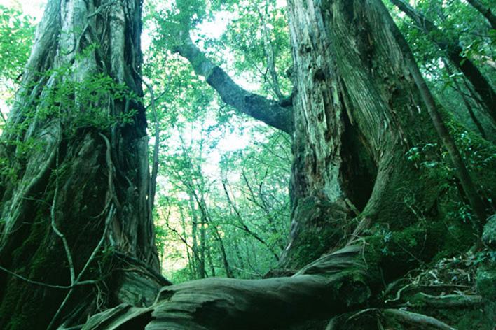 メインビジュアル : 豊かな森林を消失から守れ!森林を監視し、火災をいち早く発見