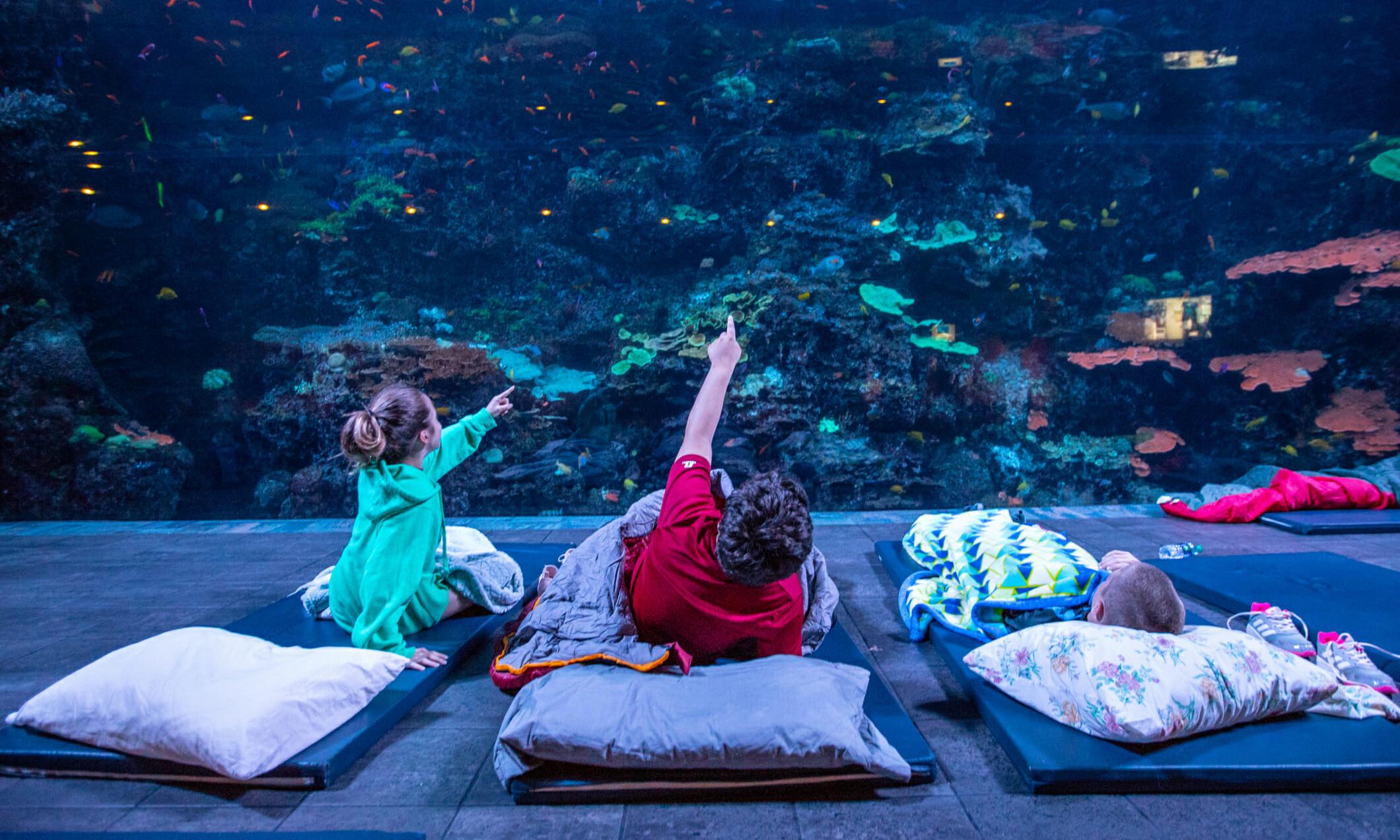 sleep-under-the-sea-10-1060x743@2x.jpg