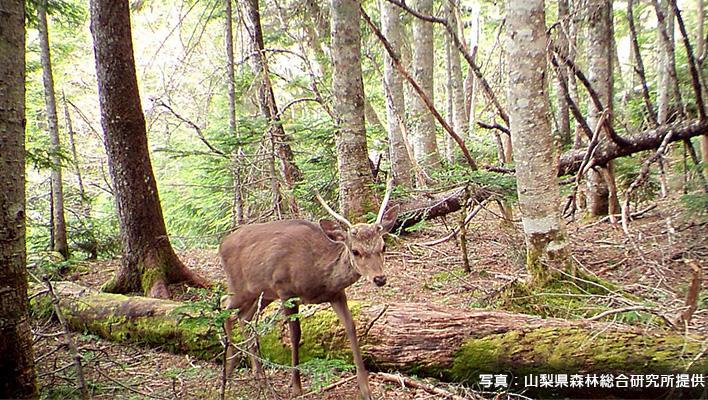 メインビジュアル : 生物多様性の保全に向けて現地に行かなくても生息数が予測できる新技術とは?