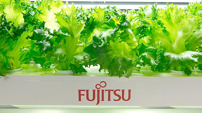 メインビジュアル : 富士通がレタスを作っている?その最新の野菜生産方法とは