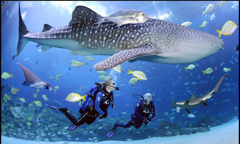 The Georgia Aquarium is full of nature's undersea wonders.