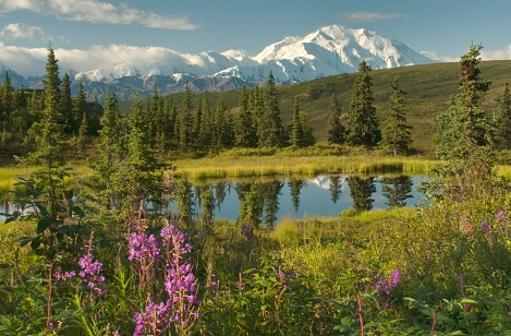Denali National Park.jpg