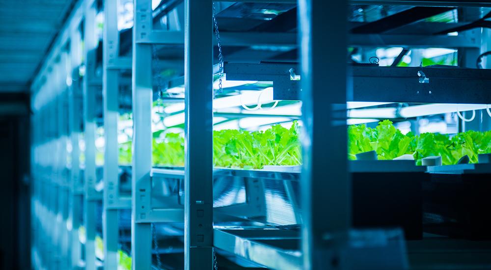 メインビジュアル : 農業ロボットは人類の未来にどんなメリットをもたらすのか?